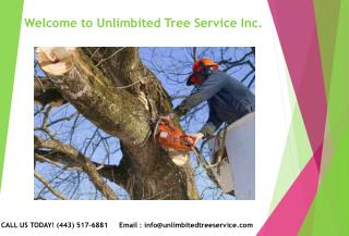 Tree Trimming Service Bowie, MD