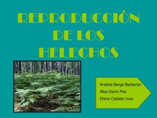 REPRODUCCI N DE LOS HELECHOS