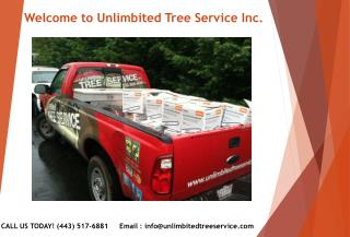 Tree Service Silver Spring