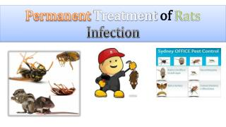 Permanent Treatment of Rats Infection