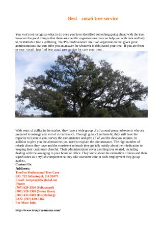 Best cotati tree service