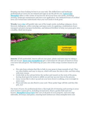 Cheap lawn care service