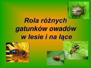 Rola r znych gatunk w owad w   w lesie i na lace