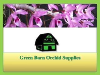 Orchid pots and Growing Media