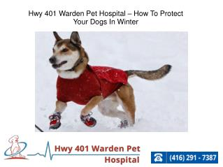 Hwy 401 Warden Pet Hospital – How To Protect Your Dogs In Winter