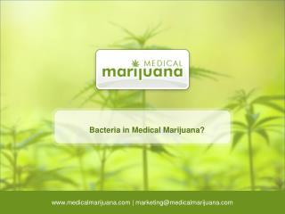 Bacteria in Medical Marijuana?