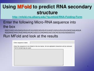 Enter the following Micro-RNA sequence into  the box  Run MFold and look at the results