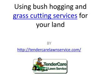Using bush hogging and grass cutting services for your land