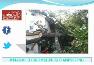Best Tree Service Silver Spring, Maryland