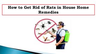 How to Get Rid of Rats in House Home Remedies