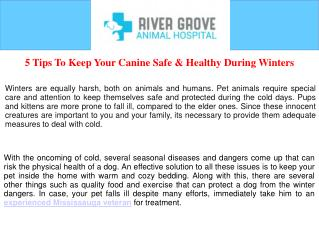 5 Tips To Keep Your Canine Safe and Healthy During Winters