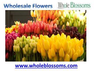 Wholesale Flowers - Whole Blossoms