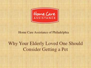 Why Your Elderly Loved One Should Consider Getting a Pet