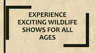 Experience Exciting Wildlife Shows for All Ages