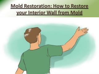 Mold Restoration - How to Restore your Interior Wall from Mold