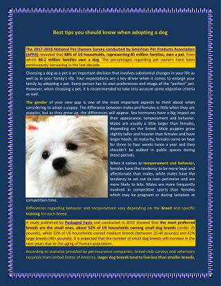 Best tips you should know when adopting a dog
