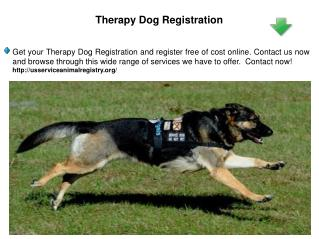 Therapy Dog Registration
