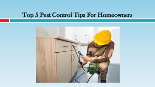 Pest Control Tips For Homeowners