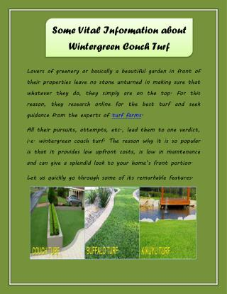 Some Vital Information about Wintergreen Couch Turf