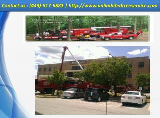 Tree Service Silver Spring, Maryland