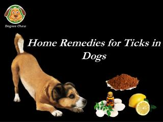 Home Remedies for Ticks in Dogs