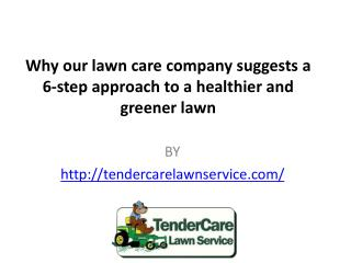 Why our lawn care company suggests a 6-step approach to a healthier and greener lawn