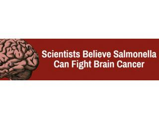 Scientists Believe Salmonella Can Fight Brain Cancer