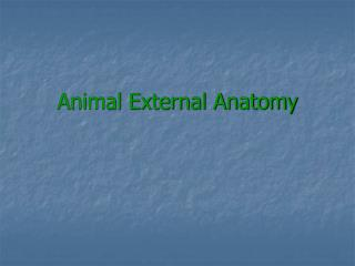 Animal External Anatomy