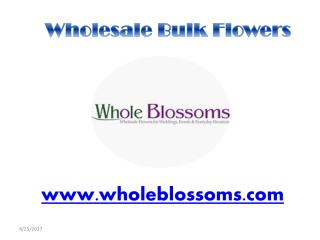 Wholesale Bulk Flowers - wholeblossoms
