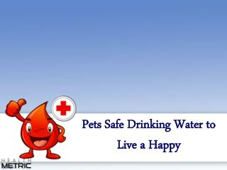 Pets Safe Drinking Water to Live a Happy