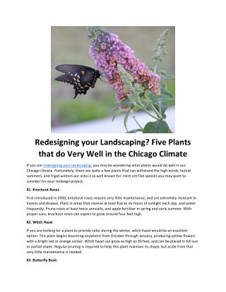 Redesigning your Landscaping? Five Plants that do Very Well in the Chicago Climate