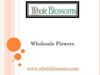 Wholesale Flowers - Whole Blossoms