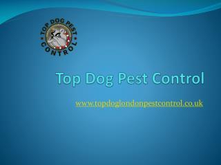 Top Dog Pest Control - Kensington Wasp Nest Removal