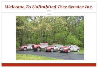 Best Tree Service in Pasadena, MD