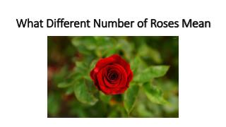 What Different Number of Roses Mean