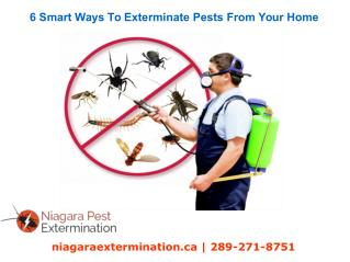 6 Smart Ways To Exterminate Pests From Your Home