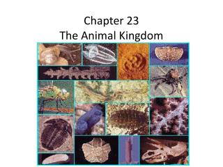 Chapter 23 The Animal Kingdom
