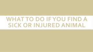 What to Do if You Find a Sick or Injured Animal