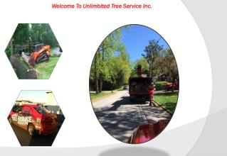 Pasadena Maryland Tree Removal Service