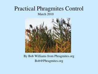 Practical Phragmites Control
