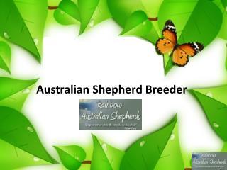Australian Shepherd Breeder
