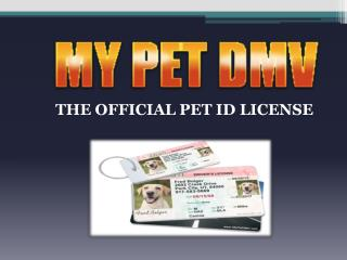 Importance of Pet Drivers License – My Pet DMV