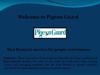 Bird removal service, Bird Control Services
