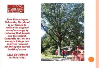 Tree Trimming Columbia - Call (443)-517-6881 Today