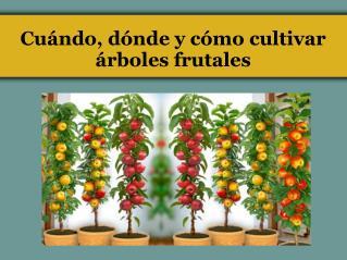 Cuándo, dónde y cómo cultivar árboles frutales
