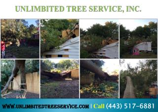 Emergency Tree Pruning Columbia