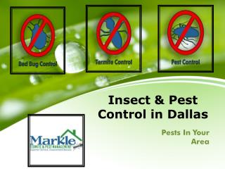 Insect & Pest Control in Dallas