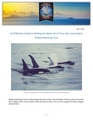 An Effective Guide to Getting the Most out of Your San Juan Island Whale Watching Tour