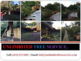 Expert Tree Service Baltimore, MD