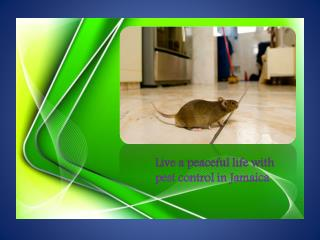 Live a peaceful life with pest control in Jamaica